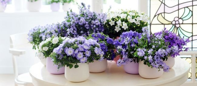 Цветок жених и невеста