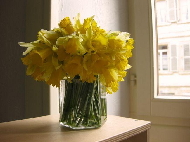 цветы любовь
