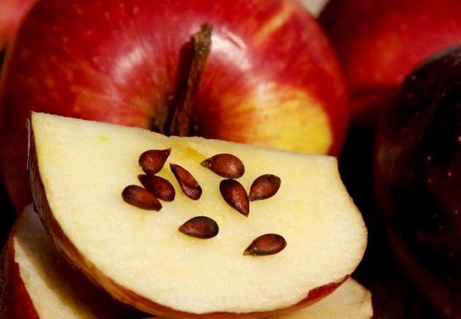 Яблочные косточки