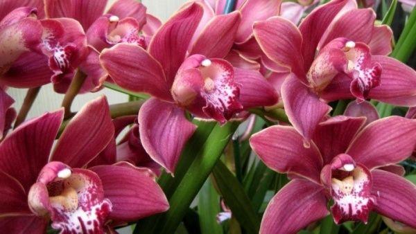 Как поливать орхидею в домашних условиях