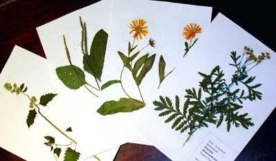 Как сделать гербарий своими руками