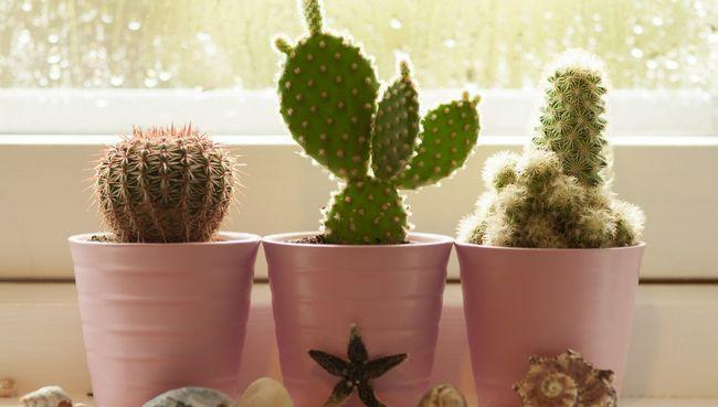 Особенности ухода за кактусом