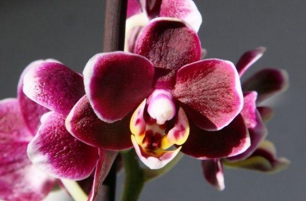 Как выбрать горшки и грунт для орхидей
