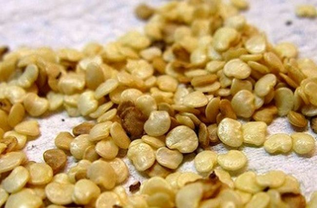 семена баклажана