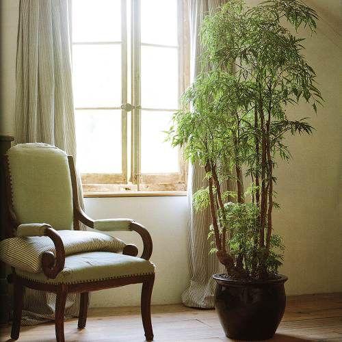 Какие комнатные цветы выбрать для своего дома