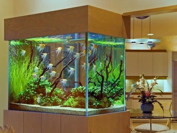 Обустраиваем аквариум с рыбками