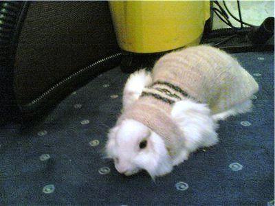Одежда для декоративного кролика