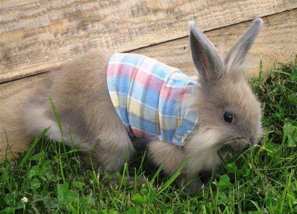 Жилетка для кролика