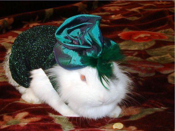 Шляпка для кролика