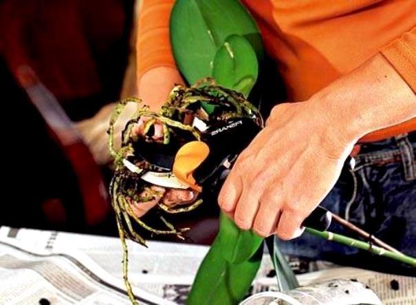Здоровье корней