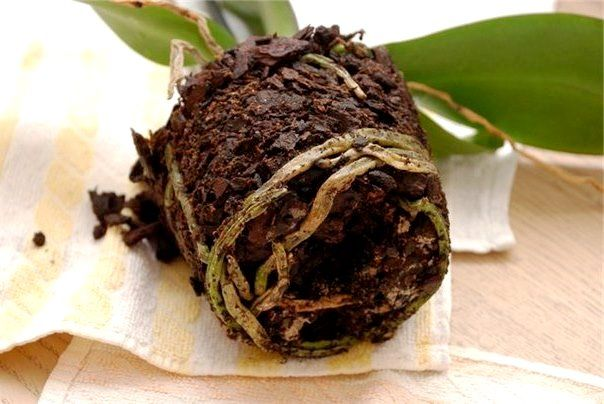 Как пересадить растение