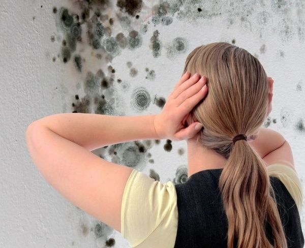грибок на стене