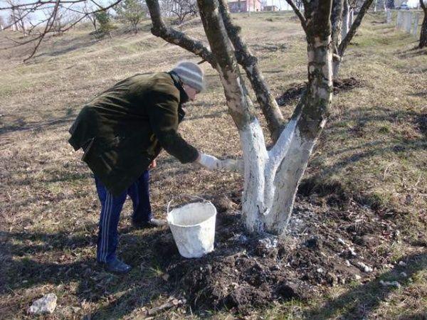 Посадка садовых цветов и кустов осенью