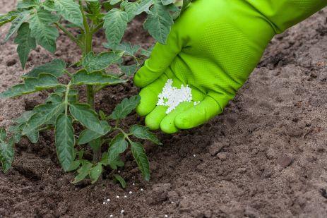 Применение фосфорных удобрений