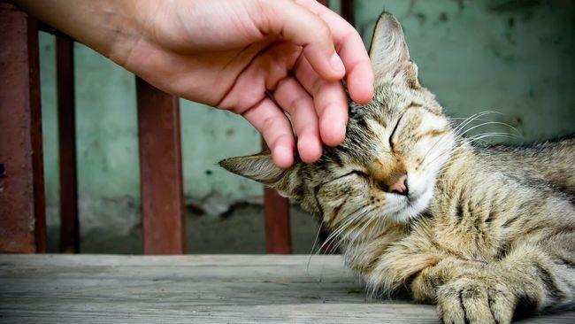 гладим кота