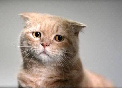 Расстройство желудка у кошек