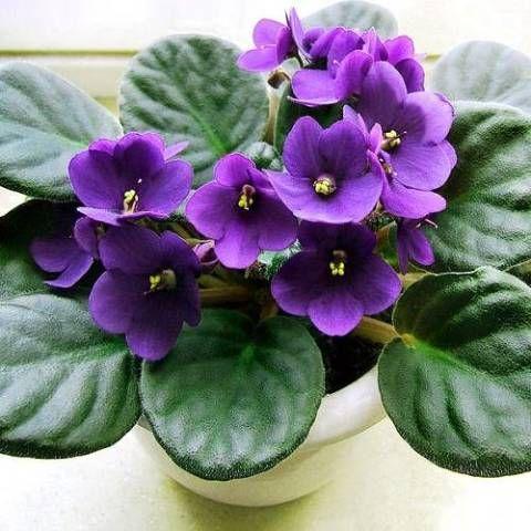 Растения для дома по фен шуй