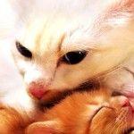 Белая кошка с котенком