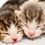 Маленькие котятки