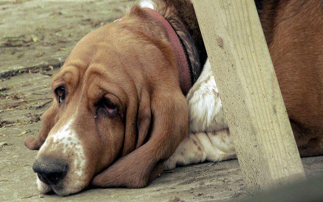 Советы психолога: осенняя депрессия
