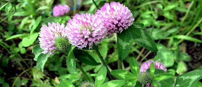 Свойства лекарственных растений