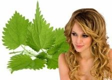 смесь сухих листьев крапивы