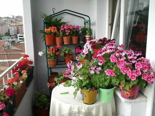Красивые комнатные цветы