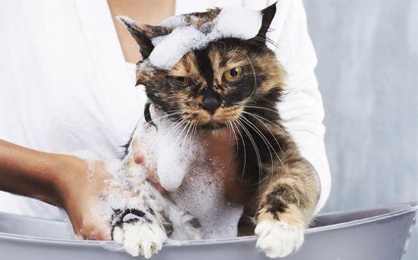 котик в тазу